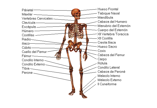 http://blogdepcpi.files.wordpress.com/2009/10/sistema-oseo1.jpg